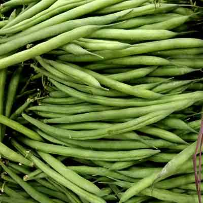 baguio-beans-wholesale