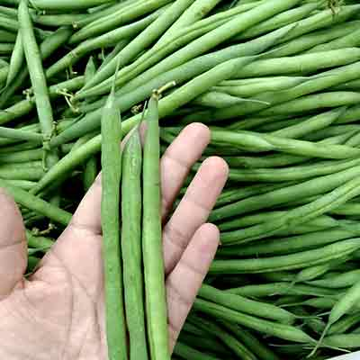string-beans-wholesale