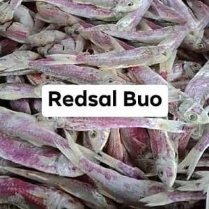 dried-redsal-salmorete-cebu-wholesale